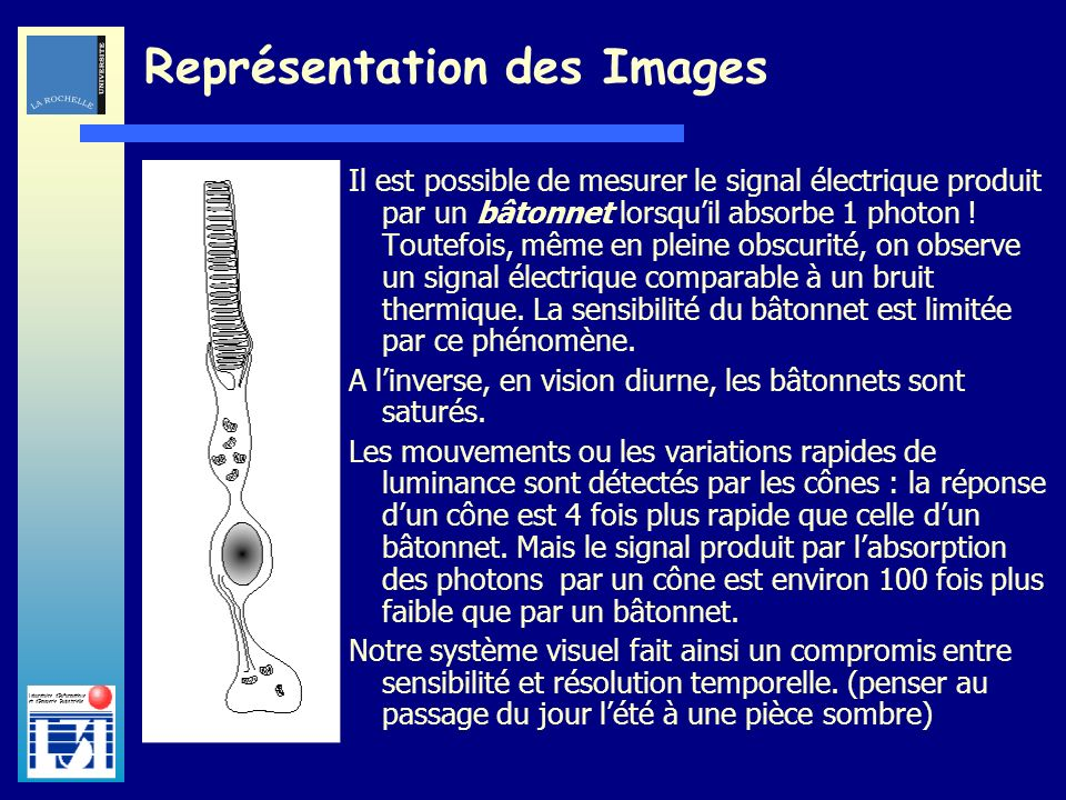 Représentation des Images