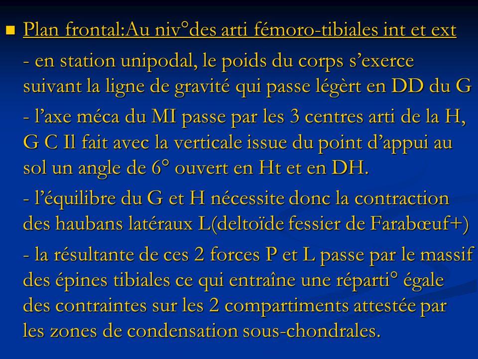 Plan frontal:Au niv°des arti fémoro-tibiales int et ext