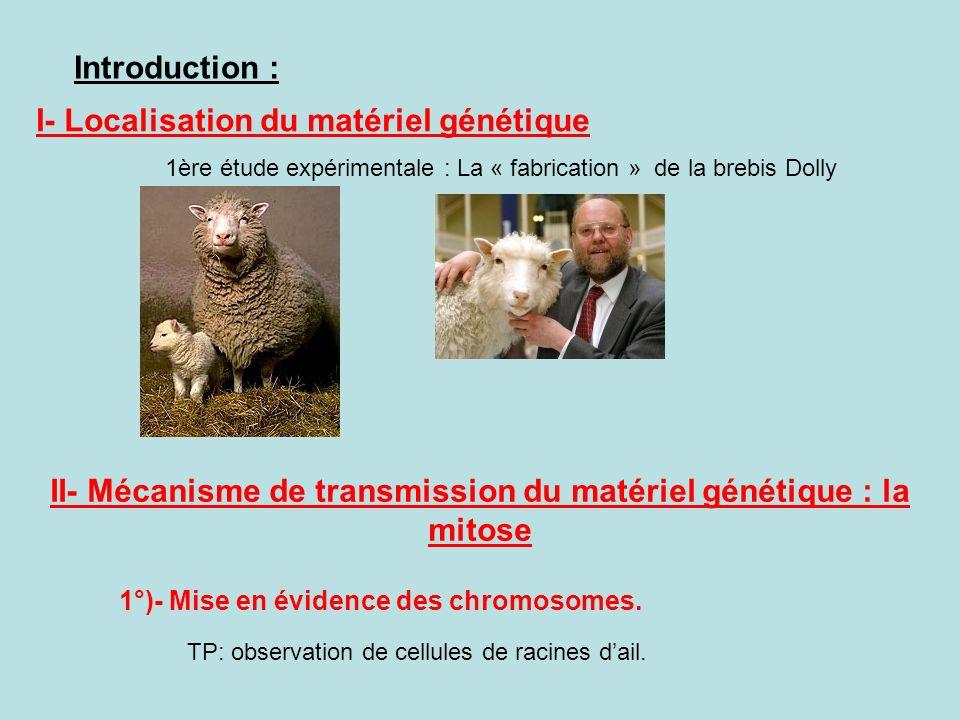 II- Mécanisme de transmission du matériel génétique : la mitose