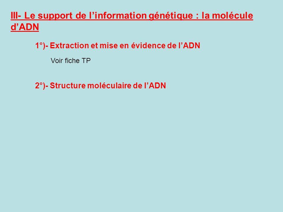 III- Le support de l'information génétique : la molécule d'ADN
