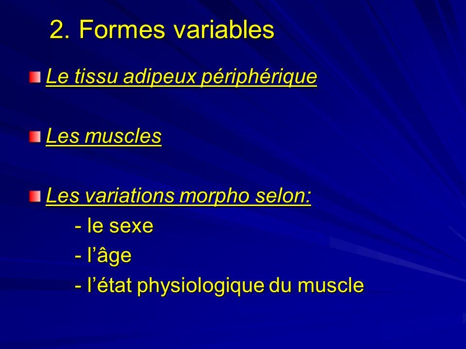 2. Formes variables Le tissu adipeux périphérique Les muscles