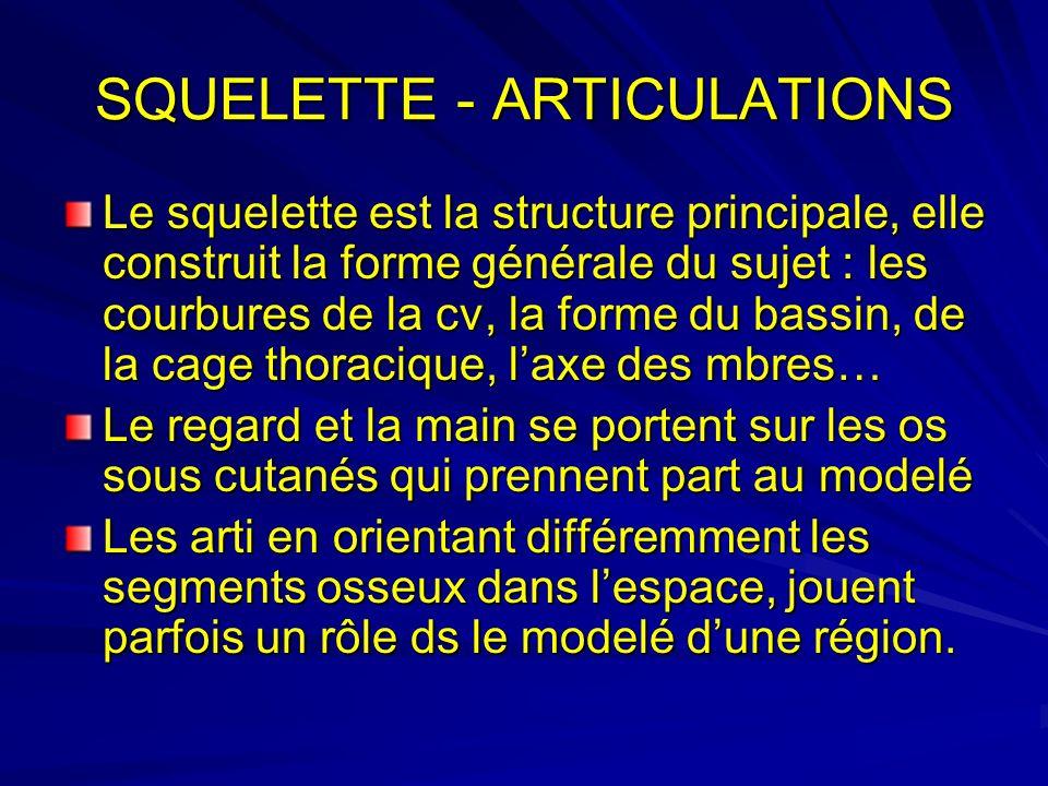 SQUELETTE - ARTICULATIONS