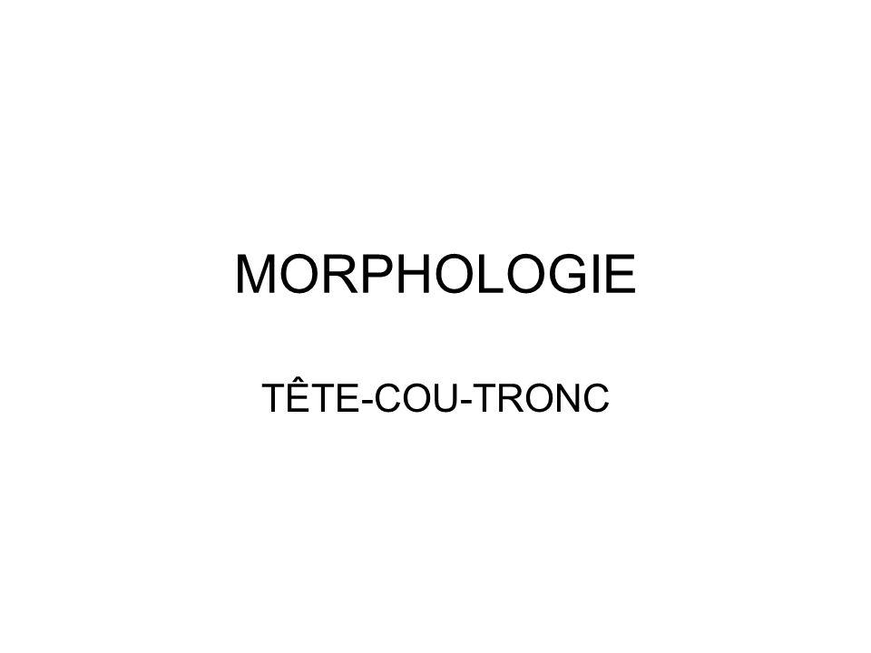 MORPHOLOGIE TÊTE-COU-TRONC