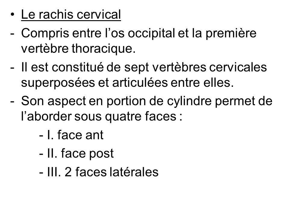 Le rachis cervical Compris entre l'os occipital et la première vertèbre thoracique.