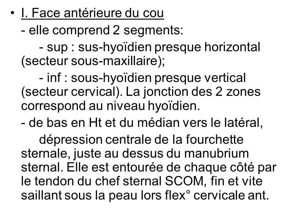 I. Face antérieure du cou