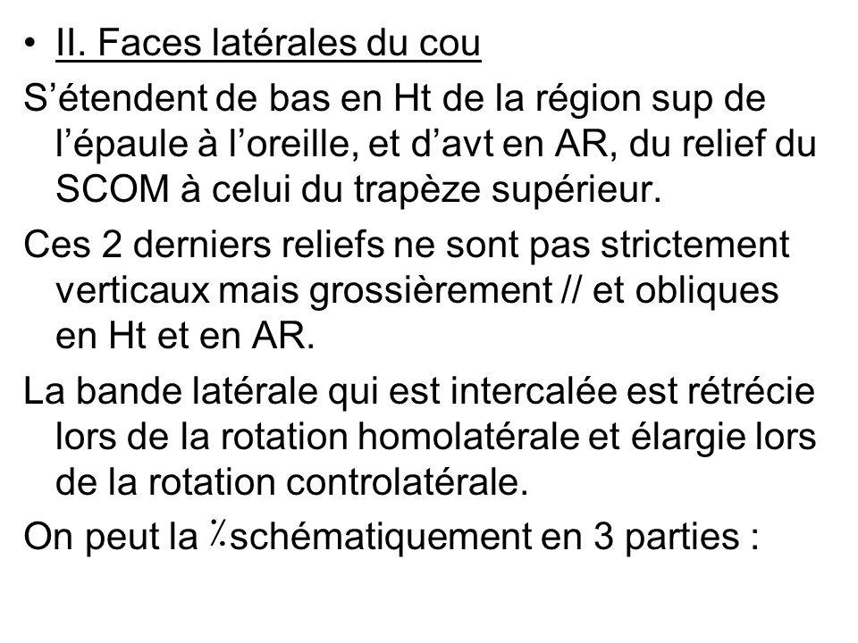 II. Faces latérales du cou