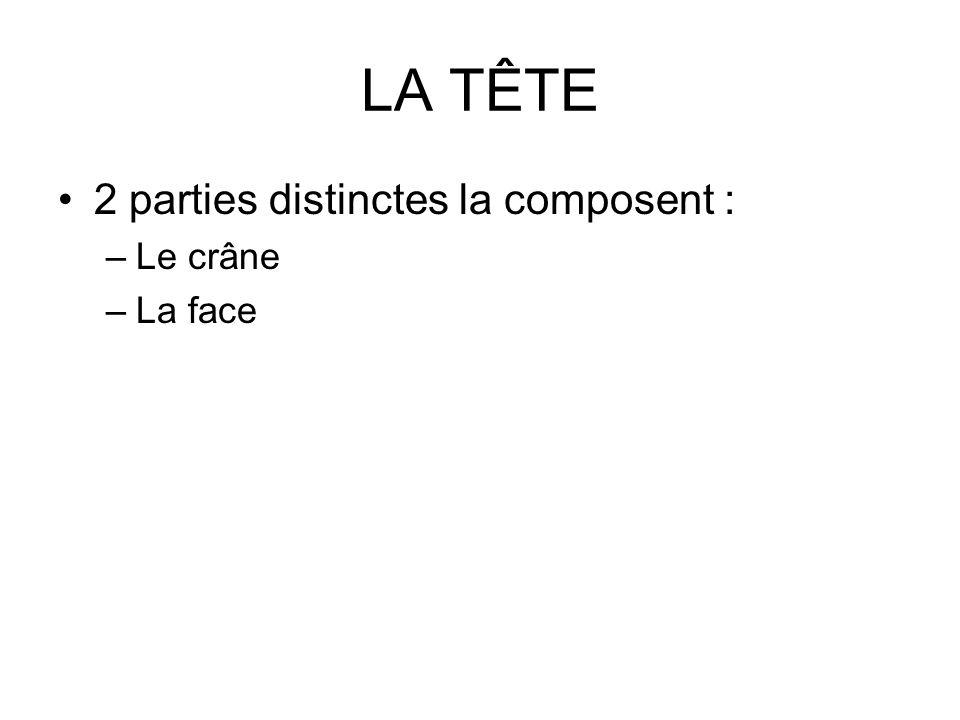 LA TÊTE 2 parties distinctes la composent : Le crâne La face