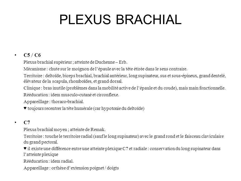 PLEXUS BRACHIAL C5 / C6. Plexus brachial supérieur ; atteinte de Duchenne – Erb.