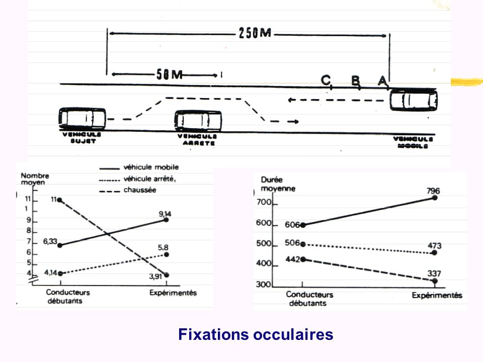 Fixations occulaires