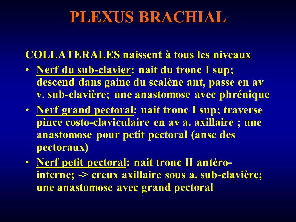 PLEXUS BRACHIAL COLLATERALES naissent à tous les niveaux