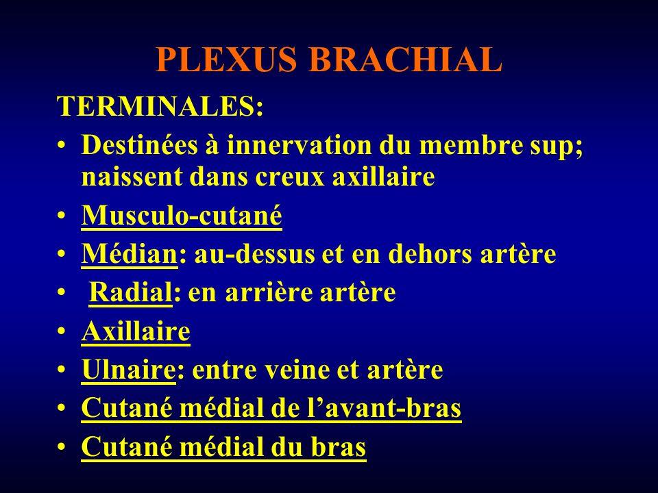 PLEXUS BRACHIAL TERMINALES: