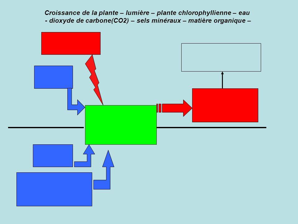 Croissance de la plante – lumière – plante chlorophyllienne – eau