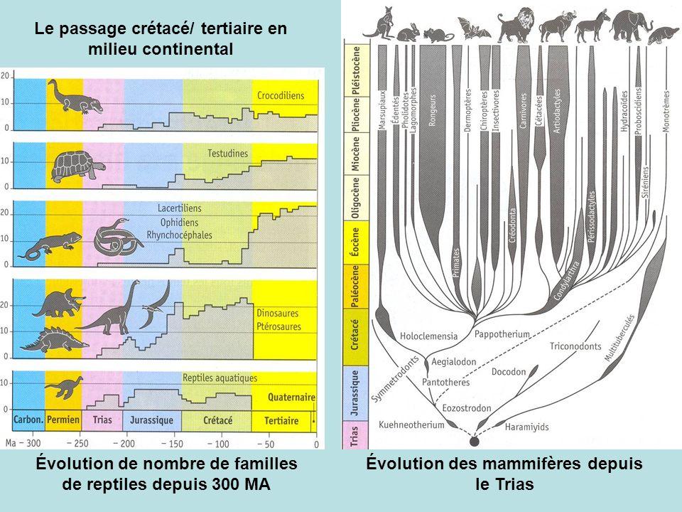 Évolution des mammifères depuis le Trias