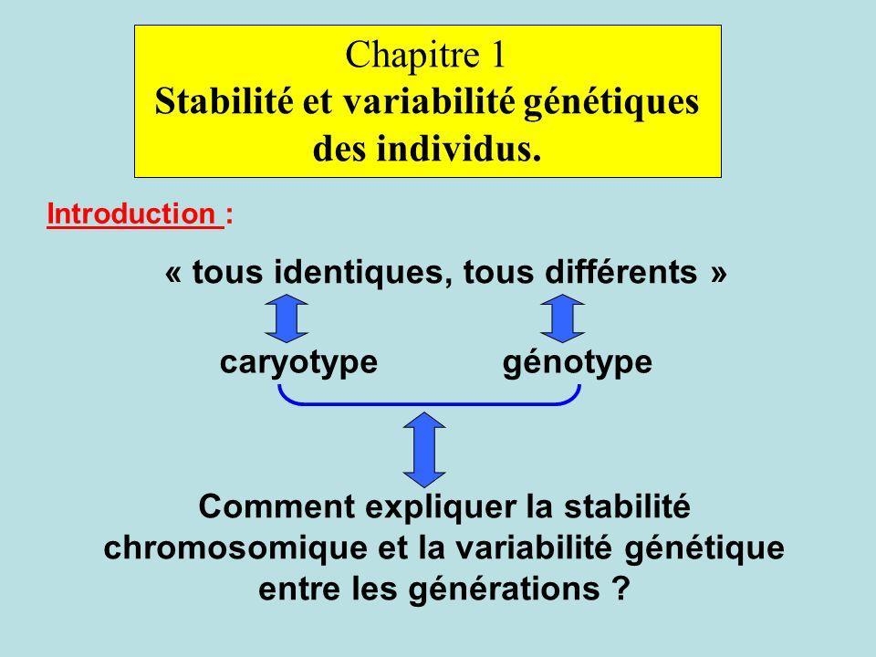 Stabilité et variabilité génétiques des individus.