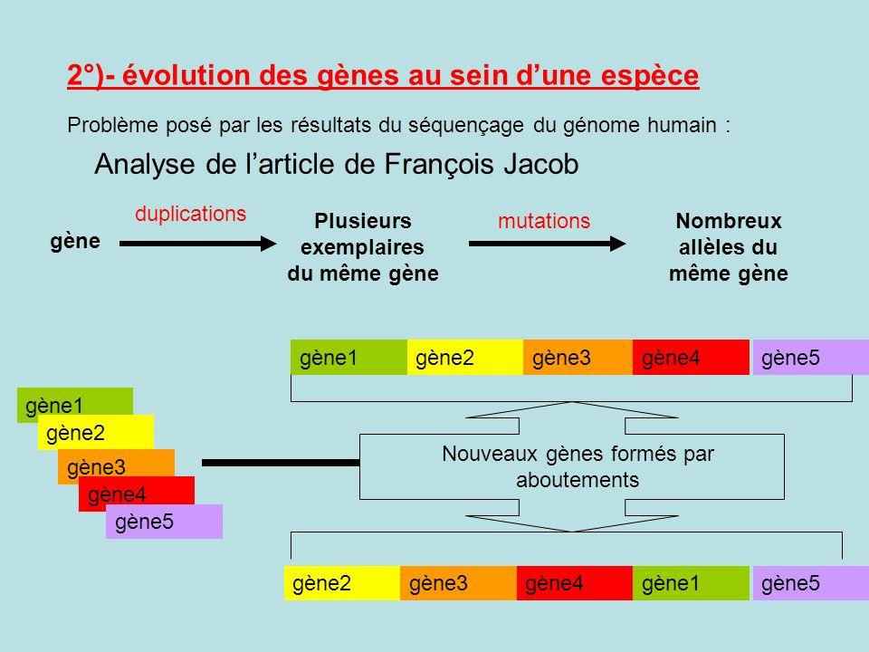 Plusieurs exemplaires du même gène Nombreux allèles du même gène