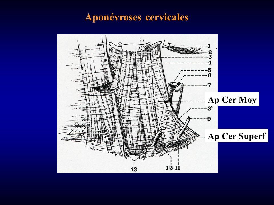 Aponévroses cervicales