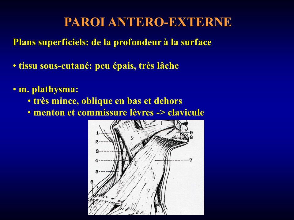 PAROI ANTERO-EXTERNE Plans superficiels: de la profondeur à la surface