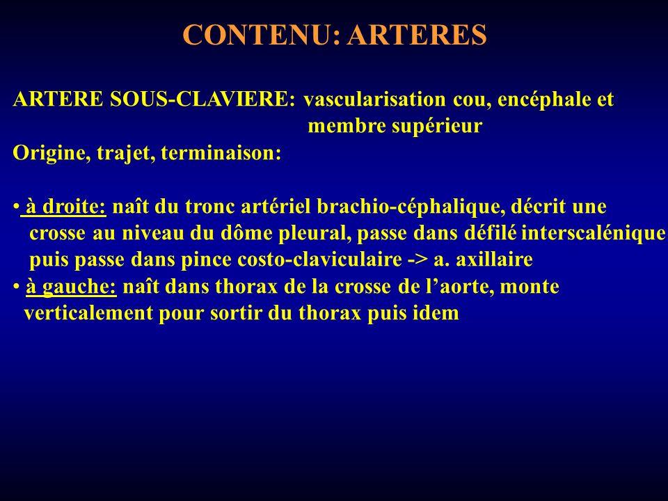 CONTENU: ARTERES ARTERE SOUS-CLAVIERE: vascularisation cou, encéphale et. membre supérieur. Origine, trajet, terminaison: