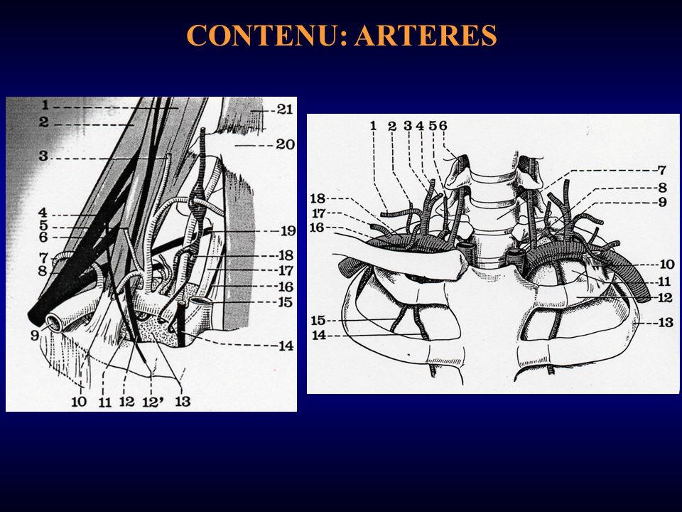 CONTENU: ARTERES