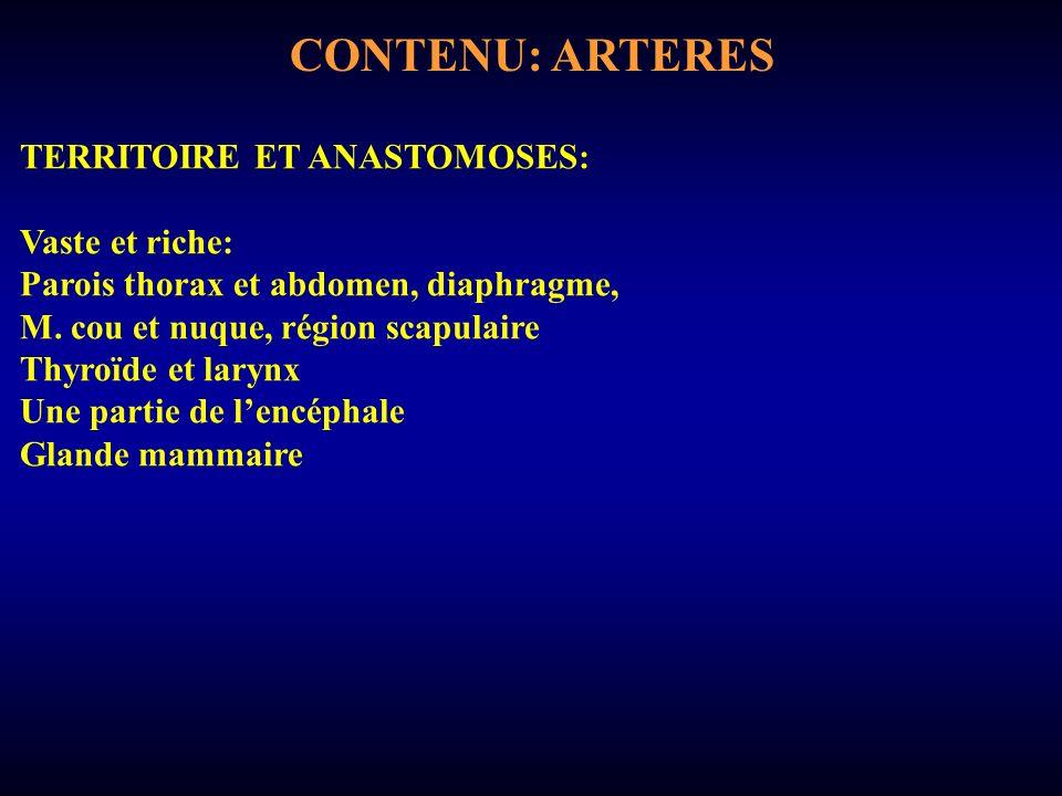 CONTENU: ARTERES TERRITOIRE ET ANASTOMOSES: Vaste et riche: