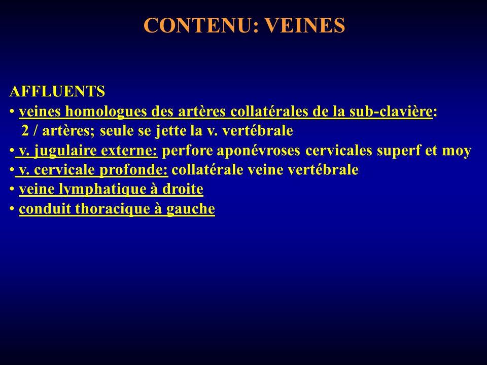 CONTENU: VEINES AFFLUENTS