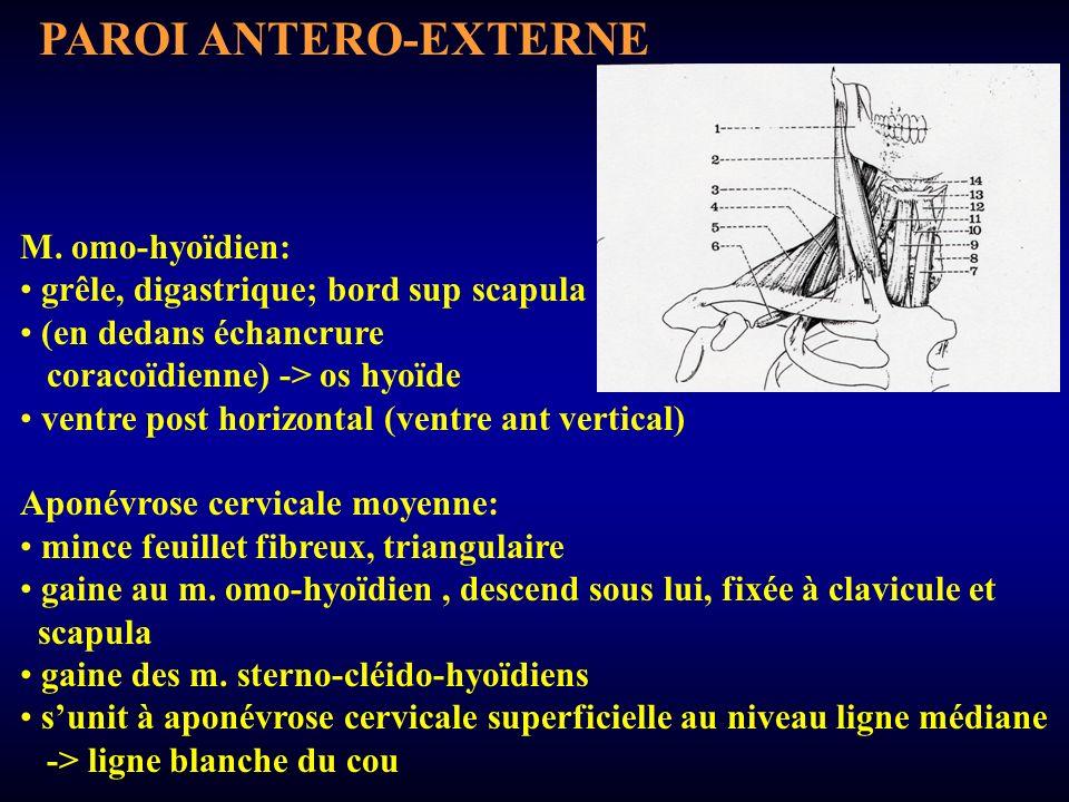 PAROI ANTERO-EXTERNE M. omo-hyoïdien: