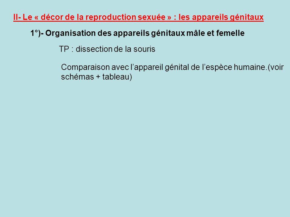 II- Le « décor de la reproduction sexuée » : les appareils génitaux