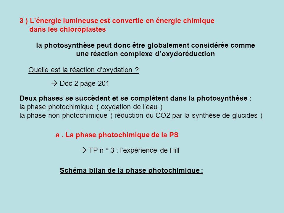 3 ) L'énergie lumineuse est convertie en énergie chimique