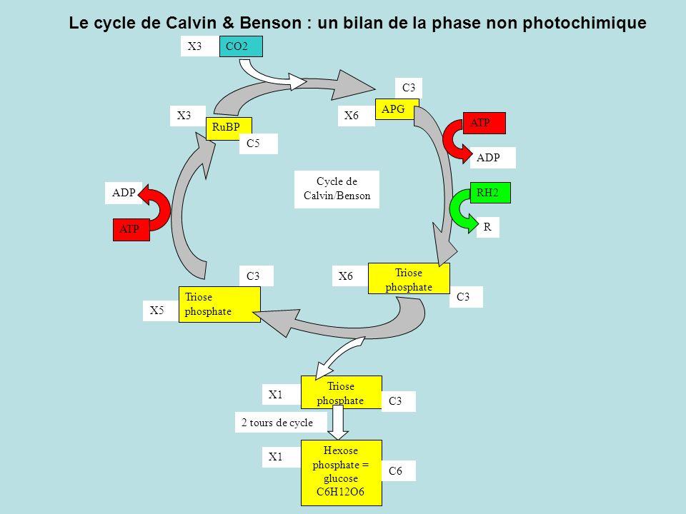 Le cycle de Calvin & Benson : un bilan de la phase non photochimique