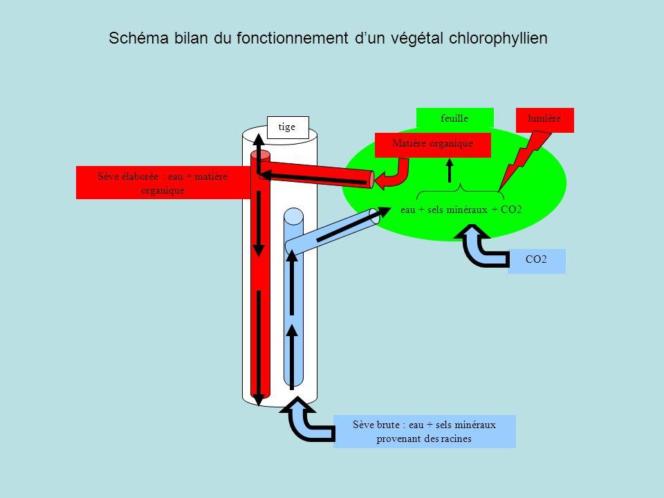 Schéma bilan du fonctionnement d'un végétal chlorophyllien