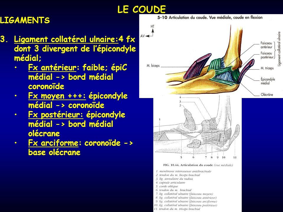 LE COUDE LIGAMENTS. Ligament collatéral ulnaire:4 fx dont 3 divergent de l'épicondyle médial;
