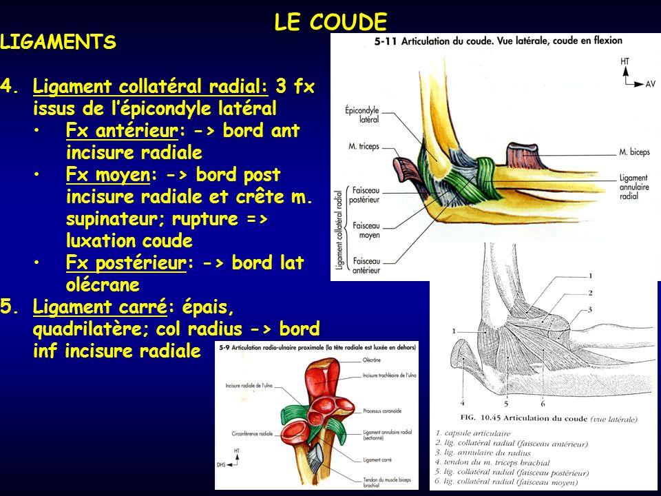 LE COUDE LIGAMENTS. Ligament collatéral radial: 3 fx issus de l'épicondyle latéral. Fx antérieur: -> bord ant incisure radiale.