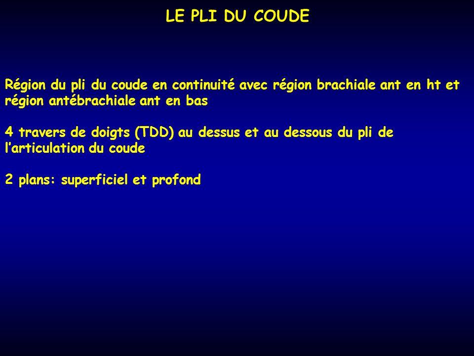 LE PLI DU COUDE Région du pli du coude en continuité avec région brachiale ant en ht et région antébrachiale ant en bas.