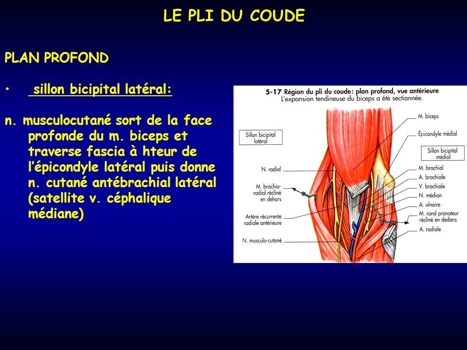 LE PLI DU COUDE PLAN PROFOND sillon bicipital latéral: