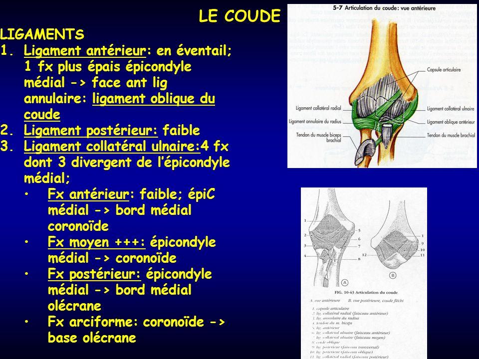 LE COUDE LIGAMENTS. Ligament antérieur: en éventail; 1 fx plus épais épicondyle médial -> face ant lig annulaire: ligament oblique du coude.