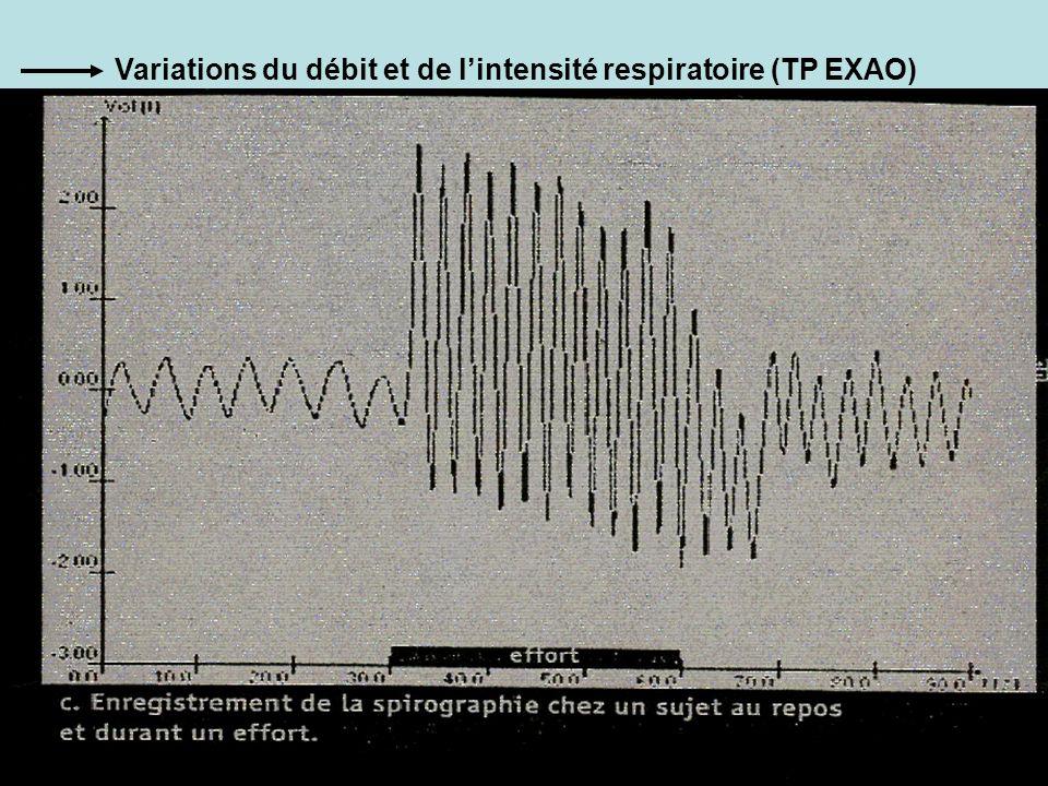 Variations du débit et de l'intensité respiratoire (TP EXAO)