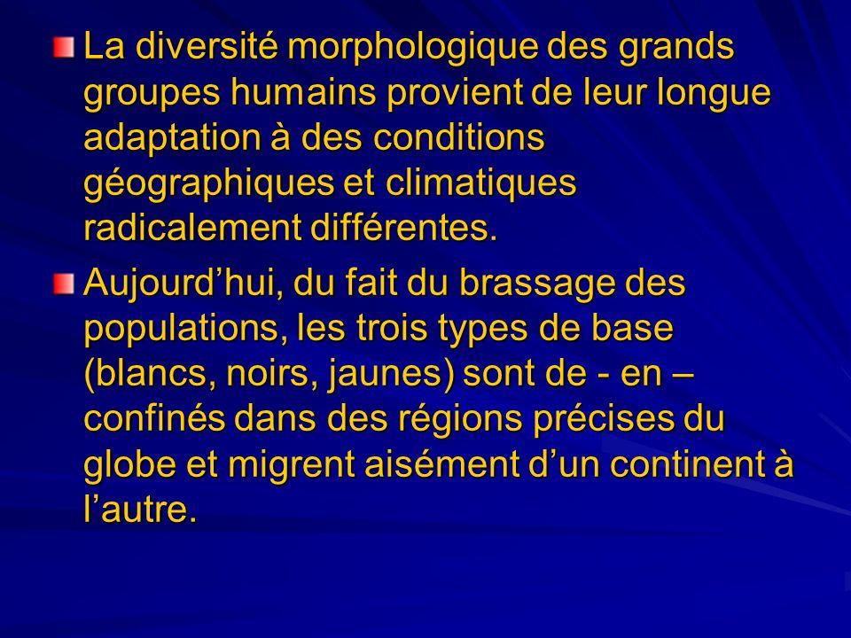 La diversité morphologique des grands groupes hum