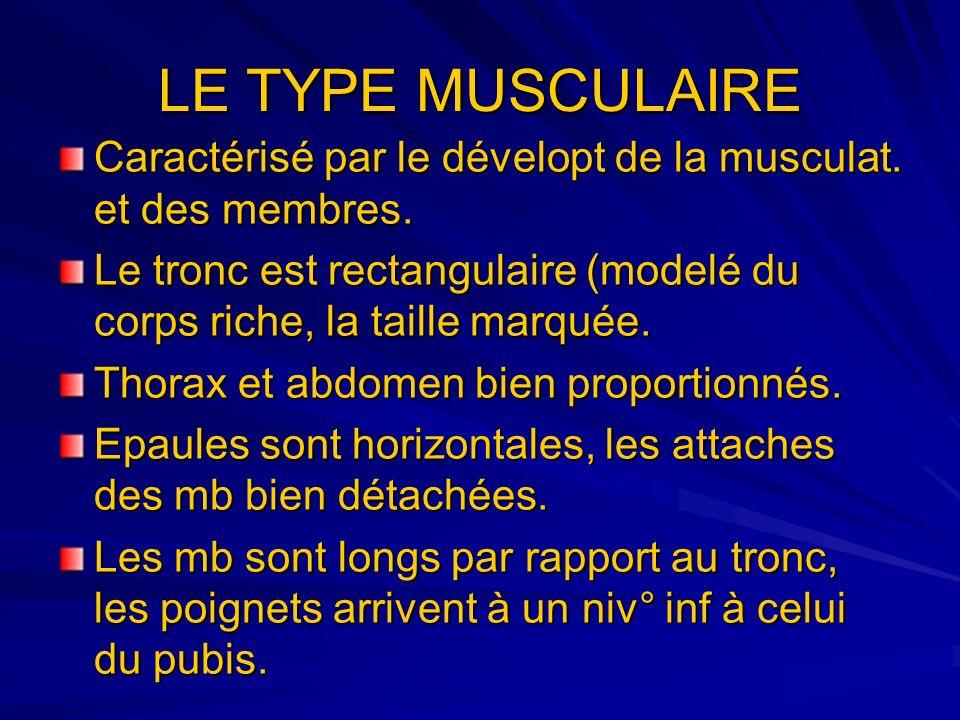 LE TYPE MUSCULAIRE Caractérisé par le dévelopt de la musculat. et des membres. Le tronc est rectangulaire (modelé du corps riche, la taille marquée.