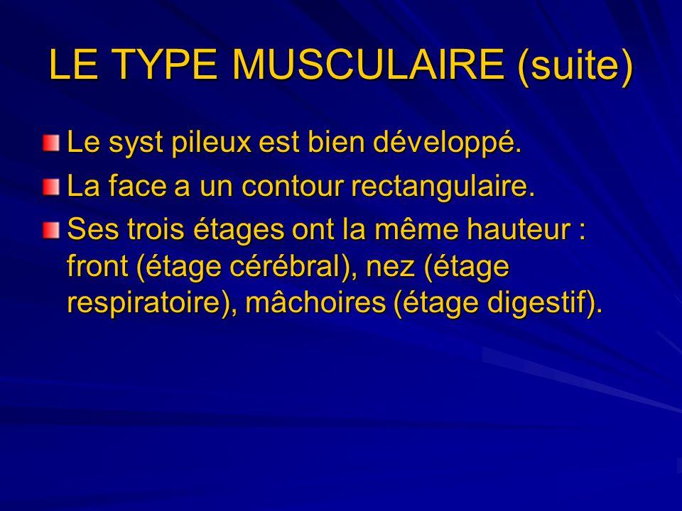 LE TYPE MUSCULAIRE (suite)