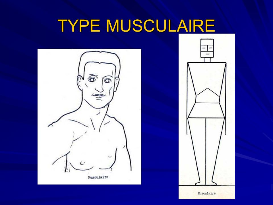 TYPE MUSCULAIRE