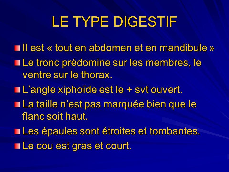 LE TYPE DIGESTIF Il est « tout en abdomen et en mandibule »