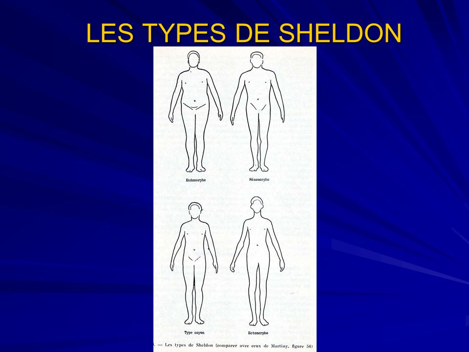 LES TYPES DE SHELDON