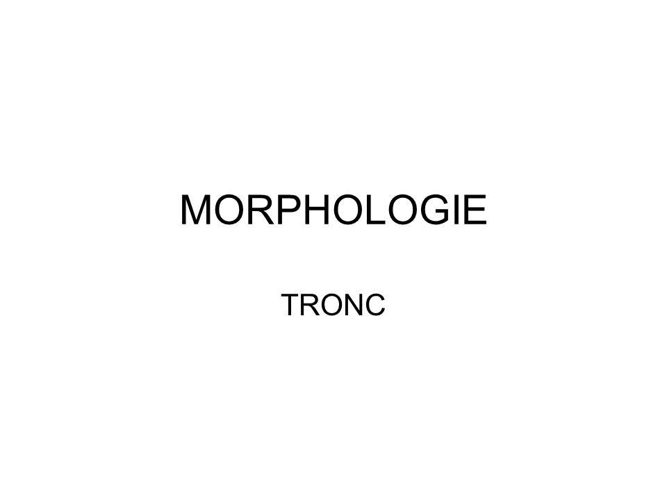 MORPHOLOGIE TRONC
