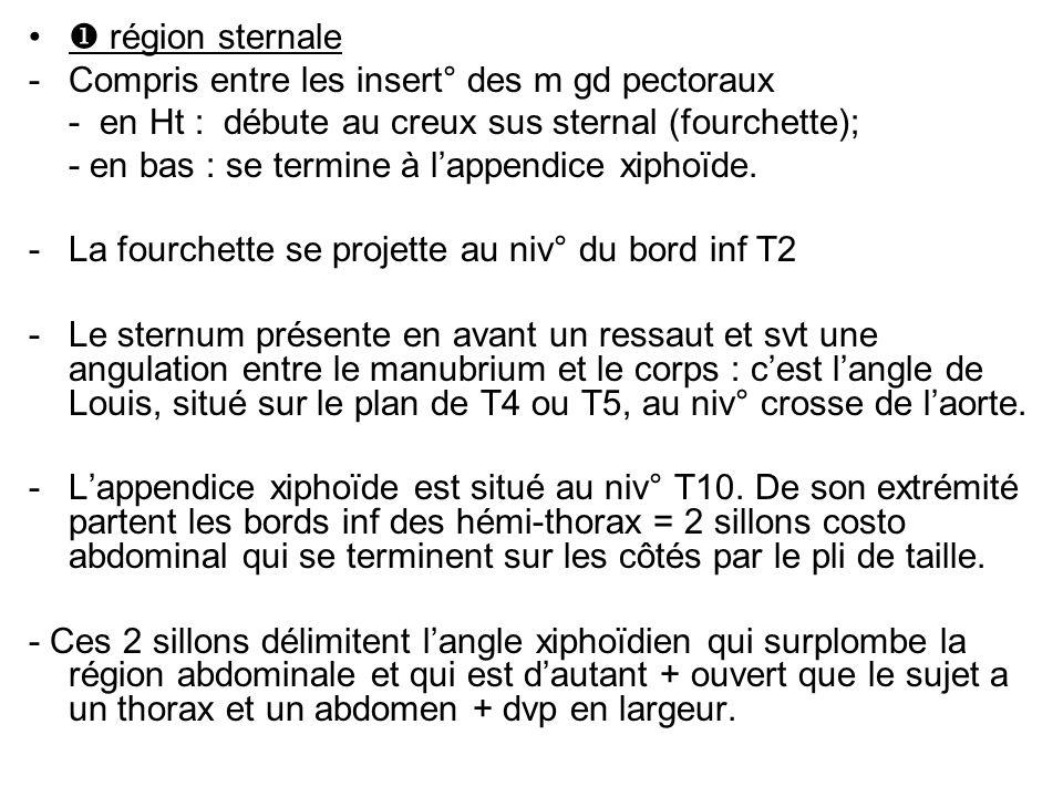  région sternale Compris entre les insert° des m gd pectoraux. - en Ht : débute au creux sus sternal (fourchette);