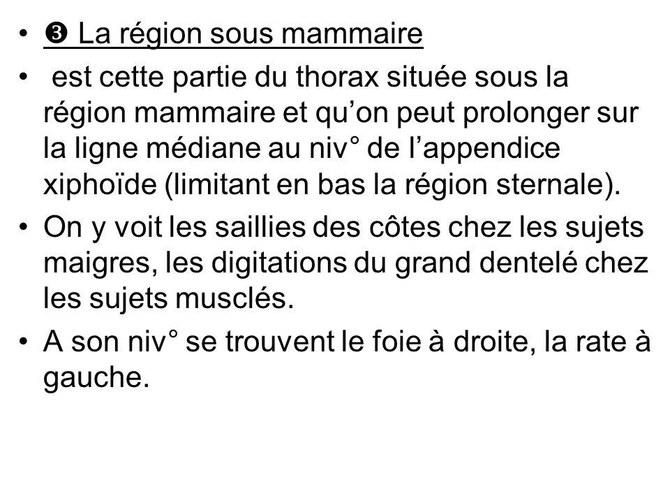  La région sous mammaire