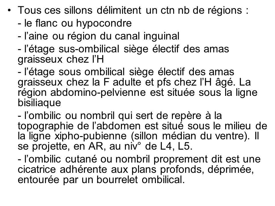 Tous ces sillons délimitent un ctn nb de régions :