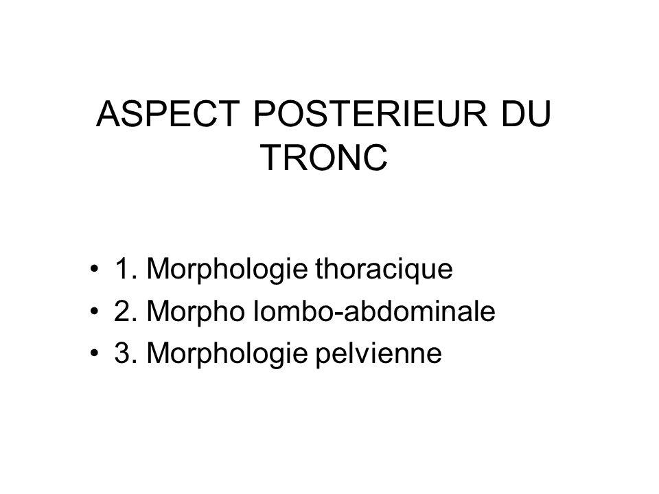 ASPECT POSTERIEUR DU TRONC