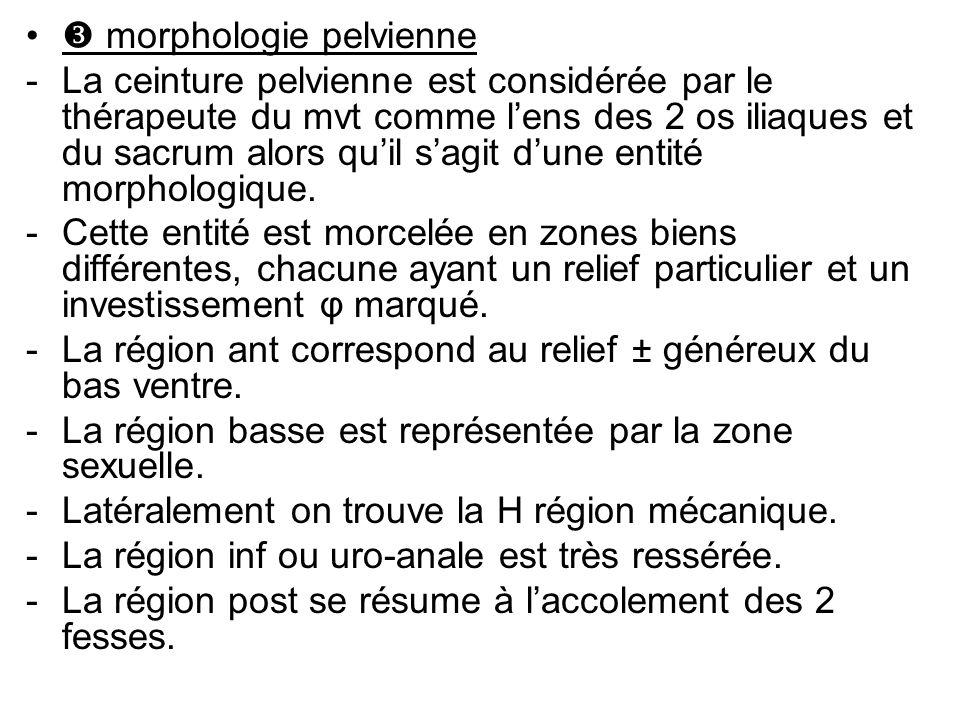  morphologie pelvienne