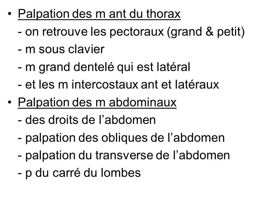 Palpation des m ant du thorax