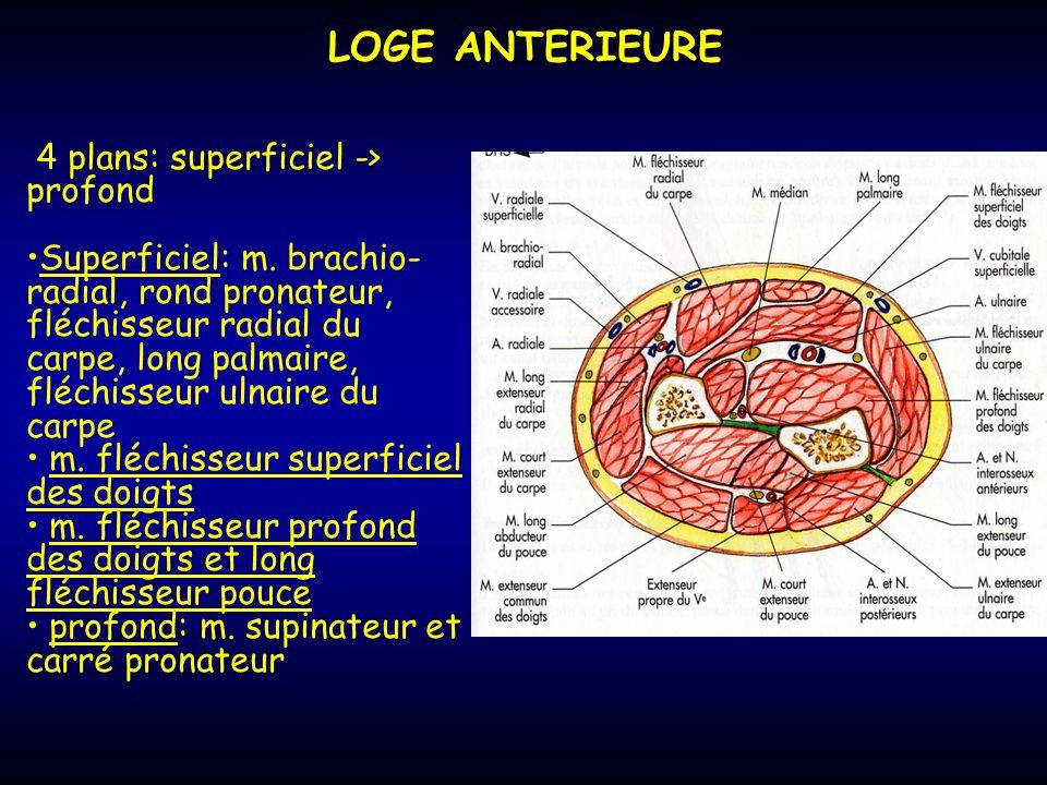 LOGE ANTERIEURE 4 plans: superficiel -> profond